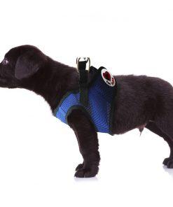 Dog Harness with a choke-free style 7