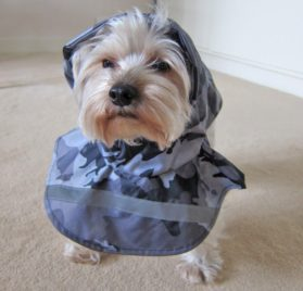 Alfie Couture Designer Pet Apparel - Waterproof Camouflage Raincoat - Color: Camouflage - 2