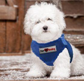 Dog Harness with a choke-free style