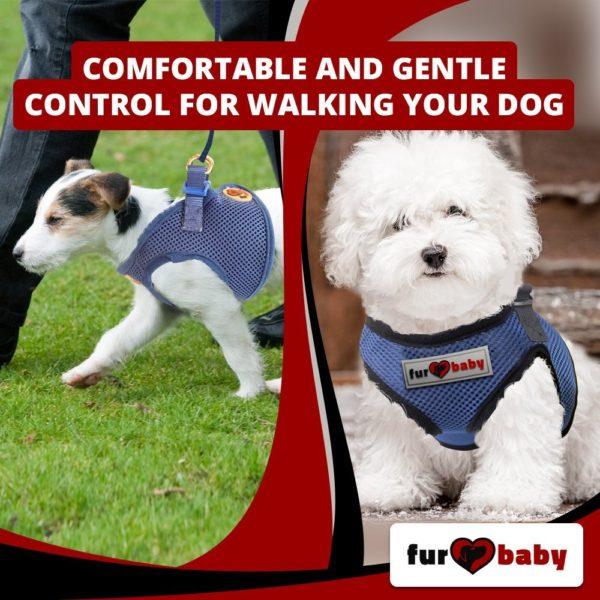 Dog Harness with a choke-free style 8