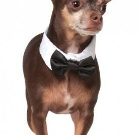 Rubies Costume Company Bowtie and Cuff Pet Accessories Set, Small/Medium - 1
