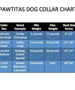 Pawtitas Reflective Dog Collar 5