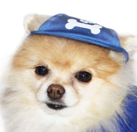 UP Collection Bone Printed Cap for Dogs, Basic Blue - 2