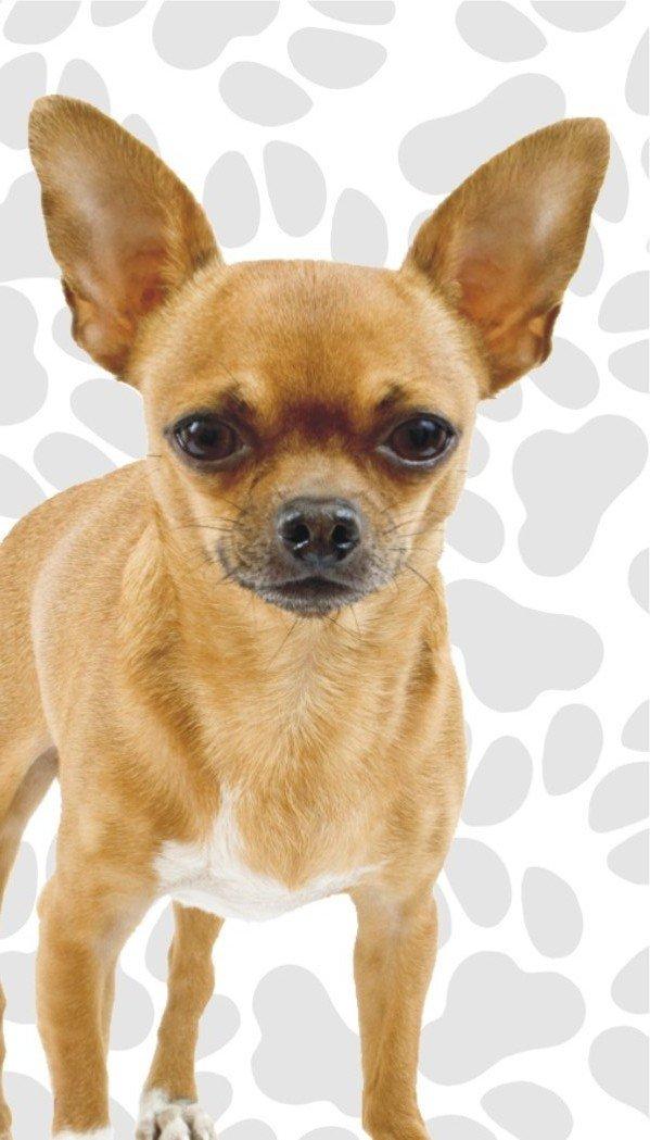 Got Yo Gifts Chihuahua Fun Flags 3