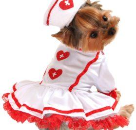 Anit Accessories Cutie Nurse Dog Costume, X-Small 8-inches