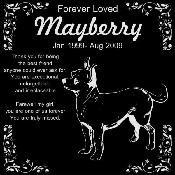 """Personalized Chihuahua Pet Memorial 12""""x12"""" Engraved Black Granite Grave Marker Head Stone Plaque MAY1"""