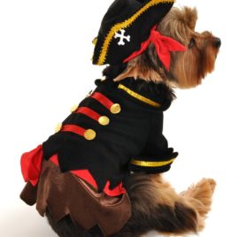 Anit Accessories Buccaneer Pirate Dog Costume, 8-Inch 2