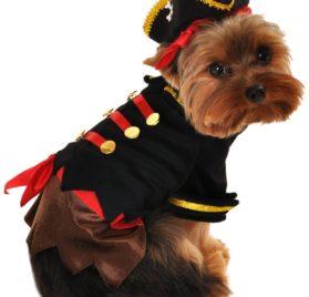 Anit Accessories Buccaneer Pirate Dog Costume, 8-Inch