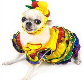 Calypso Queen Dog Costume - Size 4