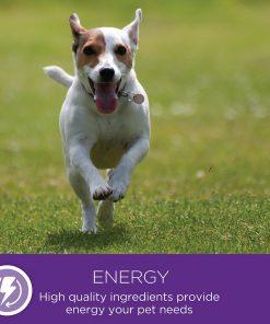 Wellness Small Breed Complete Health Turkey & Peas Senior Dog Food 10