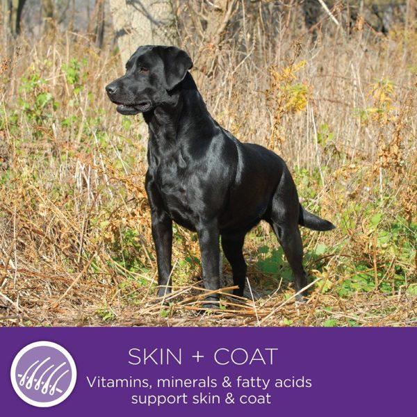 Wellness Small Breed Complete Health Turkey & Peas Senior Dog Food 7