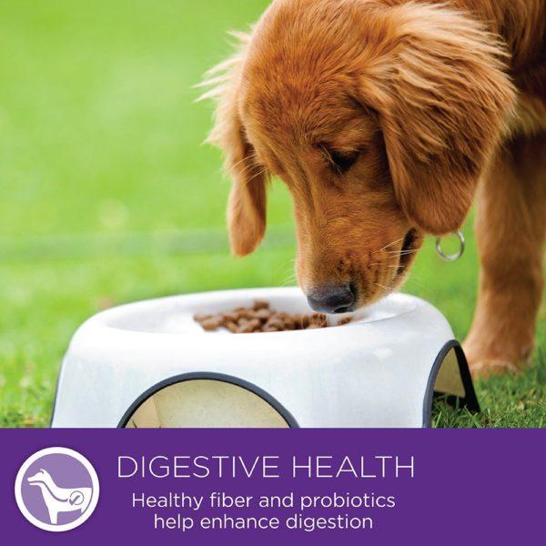 Wellness Small Breed Complete Health Turkey & Peas Senior Dog Food 8