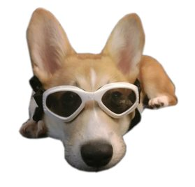 Alfie Pet by Petoga Couture - Larry Sun Glasses for Dogs and Cats