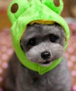 Cat Hat Dog Cap Halloween Pet Party Costumes Dog Hats 2