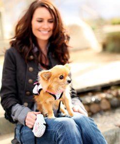 Avant Garde Chihuahua Retractable Dog Leash, Small, Pink 3