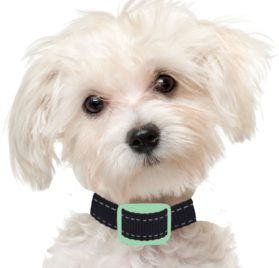 Our K9 Anti Bark Collar, Sound and Vibration Pain Free, 4 to 11-Inches, Mint, Small Dogs