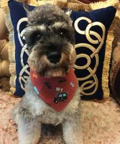 Alfie Pet by Petoga Couture - Cais Bandana for Dogs & Cats 2