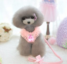 Cute Lace Small Pet Cat Dog Harness Vest And Leash Dog Puppy walk chest Collar Leads Small Dog Chihuahua Princess Jacket Clothes 2