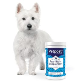 Petpost Tear Stain Remover Supplement for Dogs - Eyebright & Lutein Powder for Eye Tear Stain Treatment and Immune Support 2