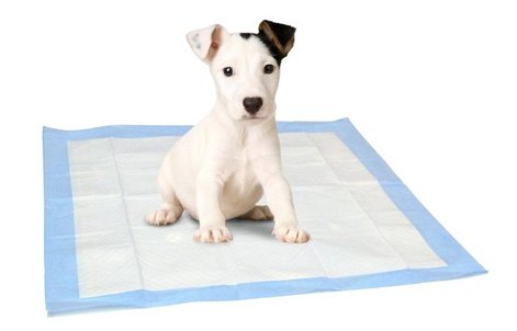 Select Companion Puppy Pee Pads 23 X 22 Inch 100 Disposable