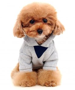 Alfie Pet by Petoga Couture - Wynna All-Season Hoodie