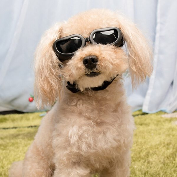 Dog Sunglasses, IN HAND UV Protective Foldable Pet Sunglasses Goggles with Adjustable Strap for Cat or Small Dogs