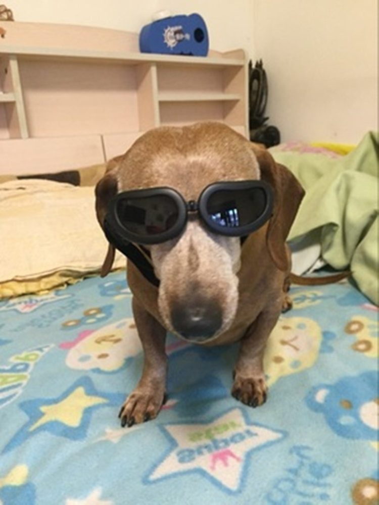 Enjoying Dog Sunglasses for Small Dogs Waterproof Dog Goggles