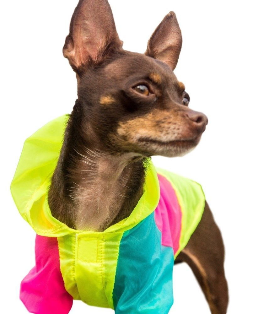 Neon Dog Jacket Teacup Xxs Xs And Small Dog Clothes