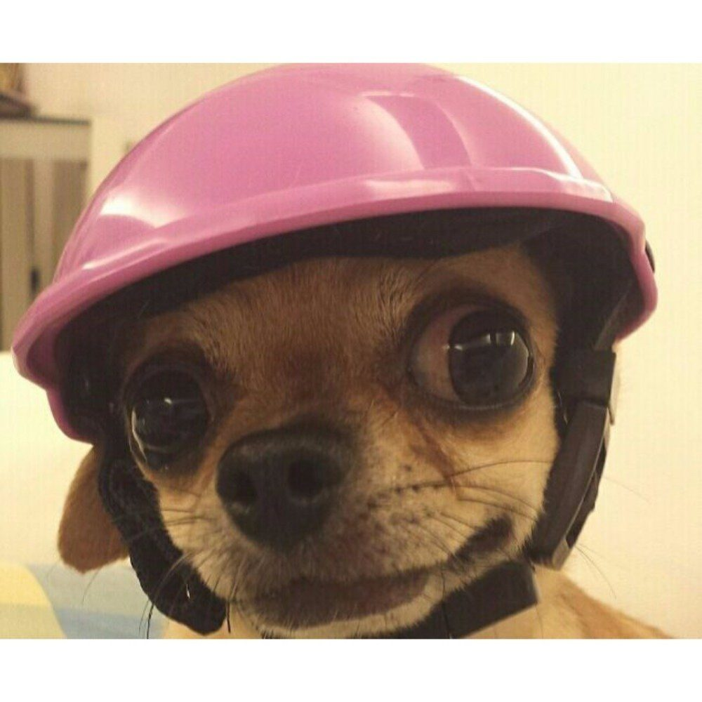 Pet Dog Motorcycles Bike Helmet Cap Yalatan Summer Dogs Hats