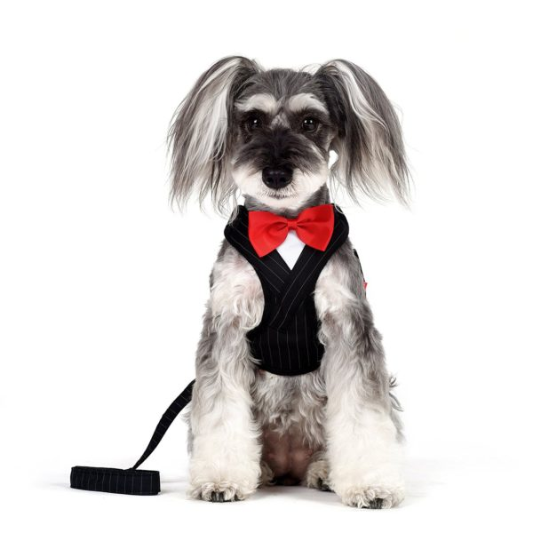 Alfie Pet by Petoga Couture - Osman Tuxedo Step-in Harness and Leash Set - Colo - Black, Size- XS