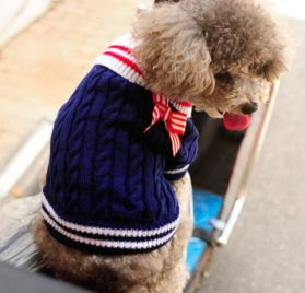 Alfie Pet by Petoga Couture - Sunny Cable Knit Sweater with Ribbon 2