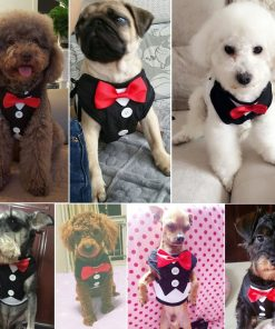 Didog Velvet Tuxedo Gentleman suit Dog Harness Vest with Handle for Small Medium Dogs,Pug, Jack Russell,Terrier,Poodle,Puppy 6