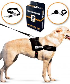 Padded Dog Harness Set: No More Struggling! Easy & Full Control With a Durable No-Pull Harness, Comfortable for Your Pet, Black - Small. Reflective & Washable. Includes a Leash and a Car Seat-Belt 1