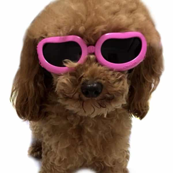 Alfie Pet by Petoga Couture - Larry Sun Glasses for Dogs and Cats - Color- Pink, Size- XS