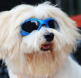 LOOYUAN Pet Dog Sunglasses - Protective Eyewear Goggles Small Waterproof Protection