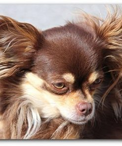 1art1 Dogs Mouse Pad - Brown Long Haired Chihuahua Dog (9 x 7 inches)