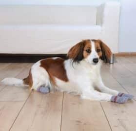 Dog socks, non-slip, XS?S (Example- Chihuahua), 2 pcs, grey 2