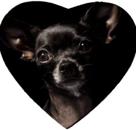 MSD Mousepad Heart Shaped Mouse Pads Mat design- 7982001 black chihuahua 2