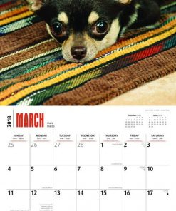 Teacup Chihuahuas 2018 12 x 12 Inch Monthly Square Wall Calendar, Animals Small Dog Breeds (Multilingual Edition) 3