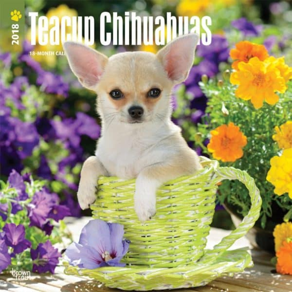 Teacup Chihuahuas 2018 12 x 12 Inch Monthly Square Wall Calendar, Animals Small Dog Breeds (Multilingual Edition)