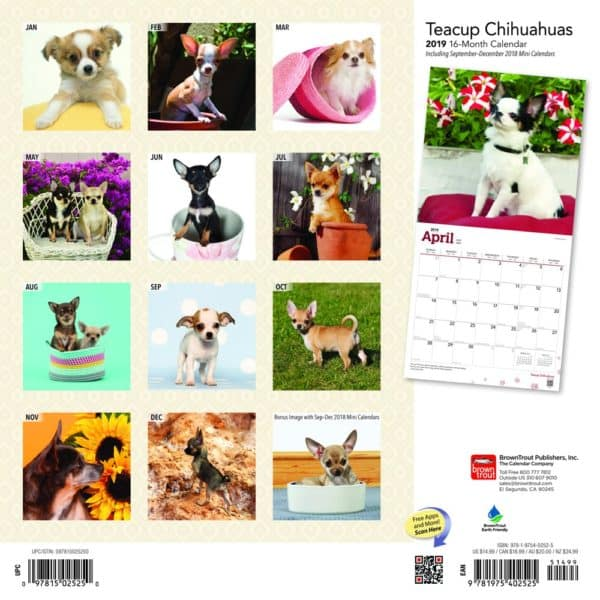 Teacup Chihuahuas 2019 12 x 12 Inch Monthly Square Wall Calendar, Animals Small Dog Breeds 2