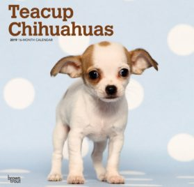 Teacup Chihuahuas 2019 12 x 12 Inch Monthly Square Wall Calendar, Animals Small Dog Breeds