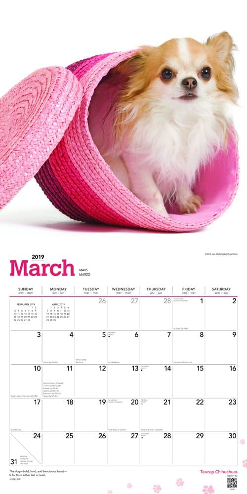 Teacup Chihuahuas 2019 12 x 12 Inch Monthly Square Wall Calendar, Animals Small Dog Breeds 3