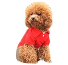 Alfie Pet by Petoga Couture - Hollis Solid Color Polo Shirt - Color- Red, Size- XS
