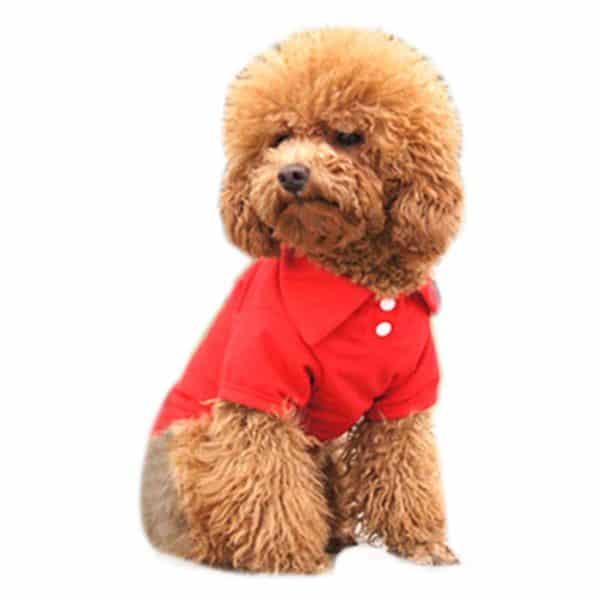 Alfie Pet by Petoga Couture - Hollis Solid Color Polo Shirt - Color- Red, Size- XS