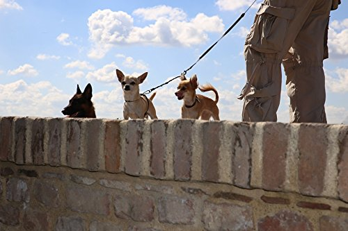 Home Comforts Peel-n-Stick Poster of Wall Sky Little Dogs Big Chihuahua Poster 24X16 Adhesive Sticker Poster Print
