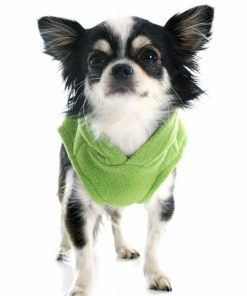 Wallmonkeys Dressed Chihuahua Wall Decal Peel and Stick Graphic WM129020 (18 in H x 13 in W) 2