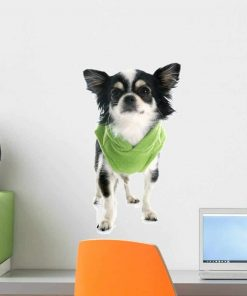 Wallmonkeys Dressed Chihuahua Wall Decal Peel and Stick Graphic WM129020 (18 in H x 13 in W)