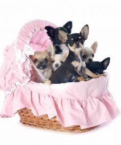 Wallmonkeys Puppies Chihuahua Wall Decal Peel and Stick Graphic WM233627 (48 in H x 48 in W) 2