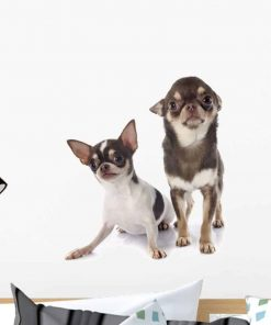 Wallmonkeys Two Chihuahuas Wall Decal Peel and Stick Graphic WM285845 (18 in H x 18 in W)